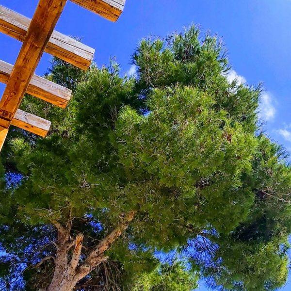Travel Can Destino Labarta Ibiza Villa Pool 28