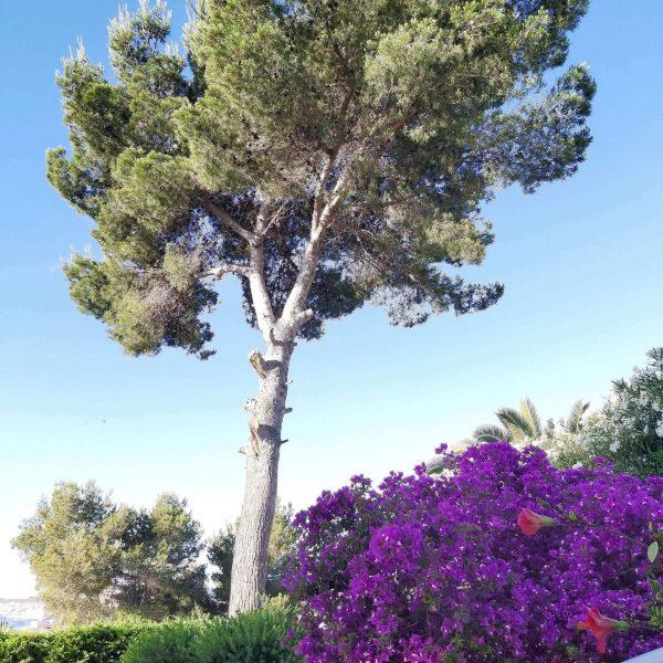 Travel Can Destino Labarta Ibiza Villa Pool 32